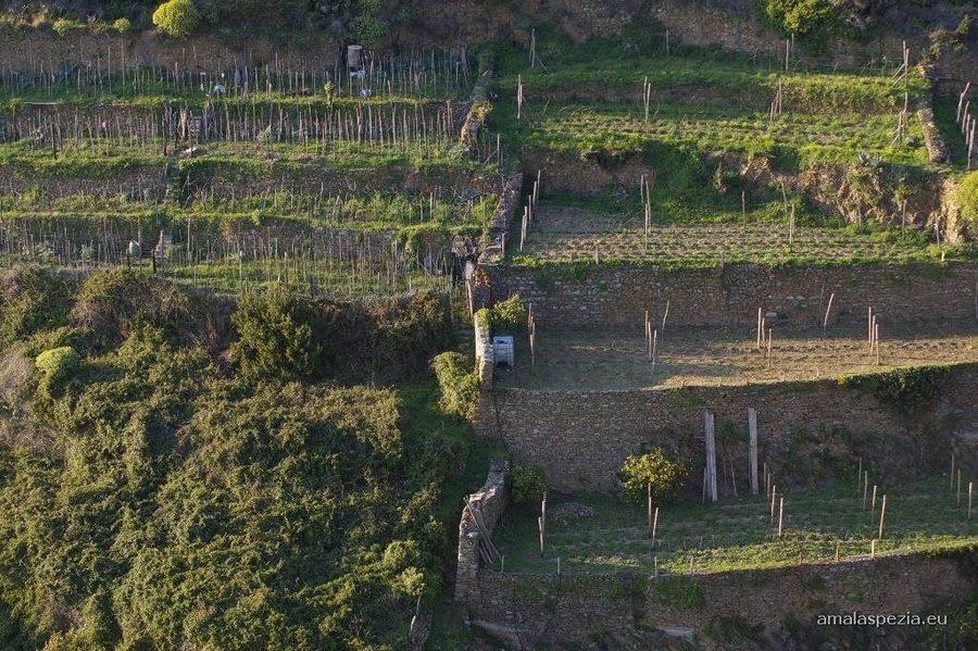 Corniglia | Guide Turistiche Liguria